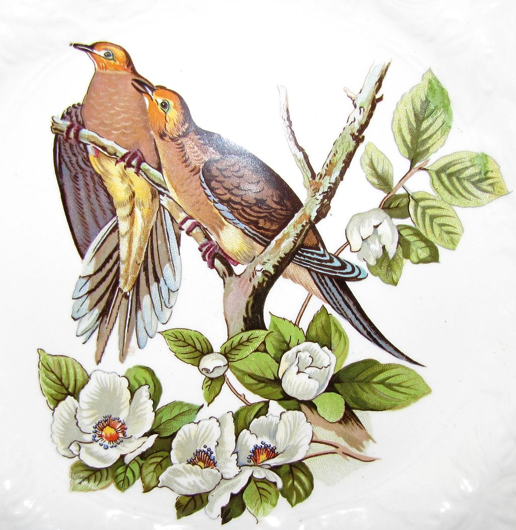 meaning of 2 doves